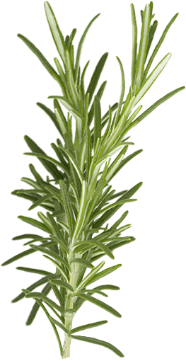rosemary-bundle-vertical-bright